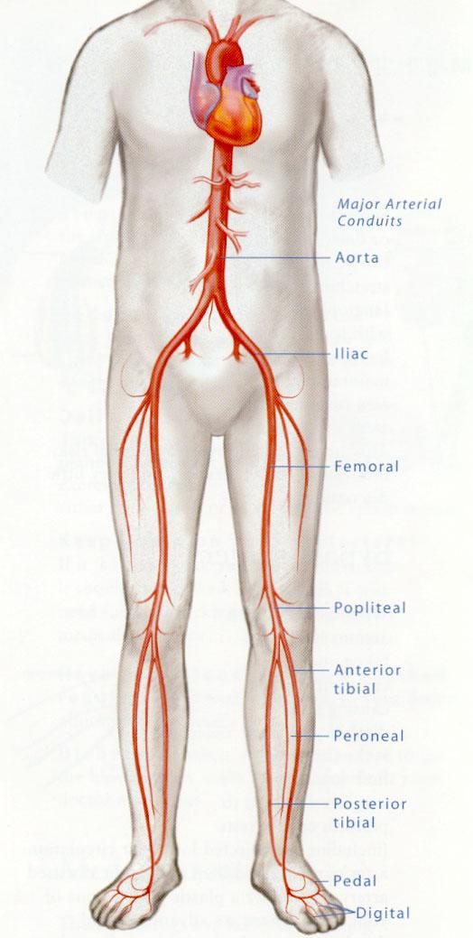Quality Vascular Imaging-Peripheral Arterial Evaluation